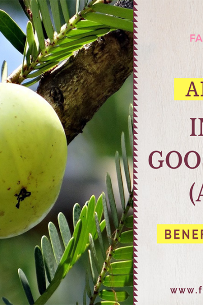 amla benefits, amla benefits for health, amla for hair, amla for skin