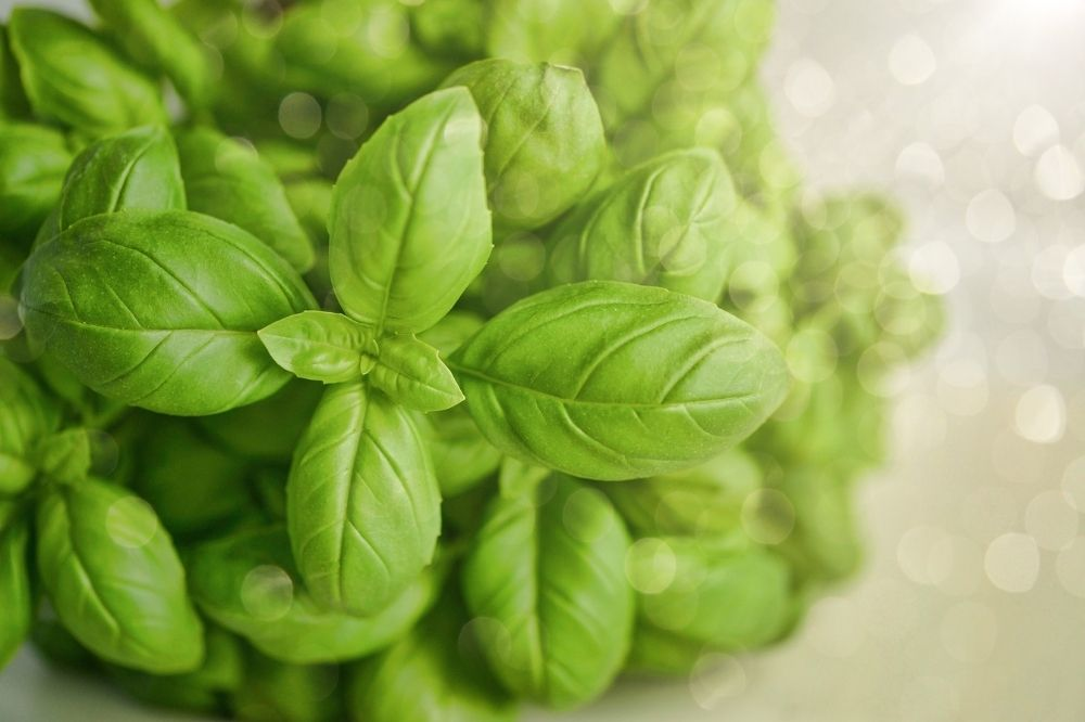 Basil for detoxification, how to use Basil for detoxification, Basil detoxifying food